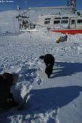 France creuse ancrage glace pour attacher chien