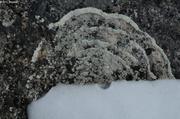 Cercles de lichen
