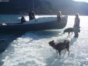 Visiteurs au bord de notre plaque de glace