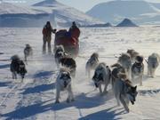 Treize chiens pour 4000km