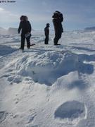 Un ours est passe a 3km du camp de glace