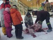 Decoupe ours a Qikiqtarjuaq