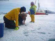 Recherche de coralline sous la banquise avec camera sous-marine