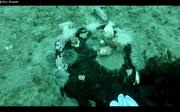 Belle flore sous-marine par 22m au site hivernage Vagabond