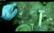 Collecte coralline
