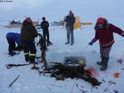 Les habitants de Qikiqtarjuaq raffolent de ces algues