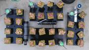 Echantillons coralline et capteurs de pH salinite lumiere et temperature