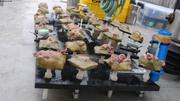 Echantillons coralline et capteurs prets au deploiement