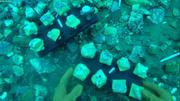 Implantation echantillons coralline pour suivi de croissance pendant un an