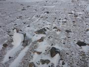 Neige d automne nord de Baffin