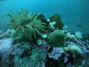 20200603 Benthos Arctic Bay ©EB