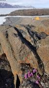20200612 Camping pres de Arctic Bay ©EB