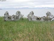 Cranes de baleines