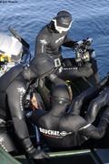 Plongeurs tentent de s approcher des baleines