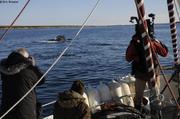 Avec les baleines de Akunap Sarqa