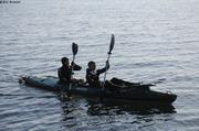 Kayak pour approcher les baleines a bosse