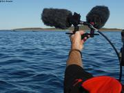 Enregistrement sonore des baleines avec Kevin en kayak