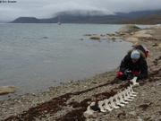 Laurent observe squelette de narval