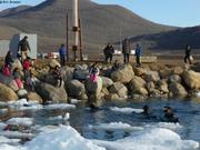 Baignade estivale a Qikiqtarjuaq