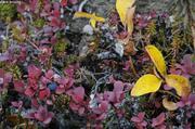 Toundra d automne