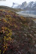 Fiord Tingin