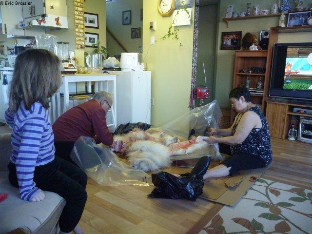 514 preparation peau d ours et dessin anime ellesmere2012 vagabond voilier polaire. Black Bedroom Furniture Sets. Home Design Ideas