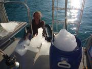 Collecte morceaux icebergs pour eau potable