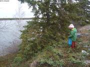 Yellowknife premiers arbres depuis un an et demi