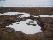 Restes de hutte en pierre