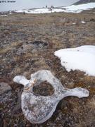 Vieux ossements de baleine