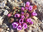 Debut floraison