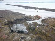Crane de baleine dans ancienne cache a viande ©EB