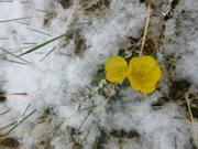 Fleurs et neige d ete ©EB