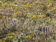Toundra en fleurs ©EB