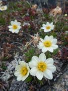 Toundra fleurie ©EB