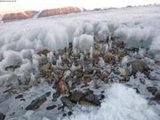 Glacier Belcher ©France Pinczon du Sel