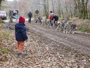Leonie observe depart attelage 14 chiens