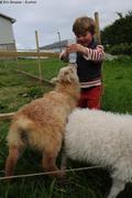 Leonie et agneaux
