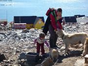 Beaucoup de chiens a Ittoqqortoormiit