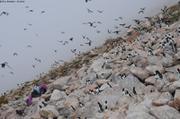 Petite colonie d un million d oiseaux