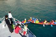 Rencontre kayakistes francais