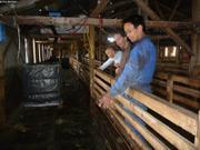 Bergerie Ipiutaq Guest Farm