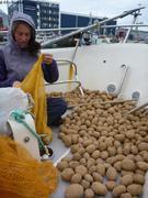 Nuuk sechage pommes de terre