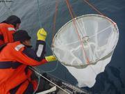 Mise a l'eau filet a plancton