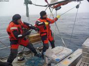Remontee filet plancton