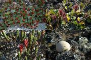 Saule et champignon