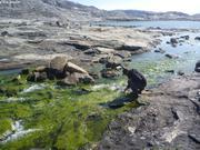 Lacs au pied de Nerernartivaq