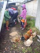 Leonie et Ina donnent a manger aux poules