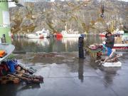 Retour de chasse au caribou a Nuuk