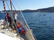 Trois baleines